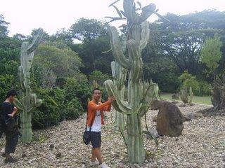 kaktus di kebun raya purwodadi