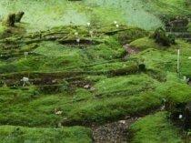 taman lumut