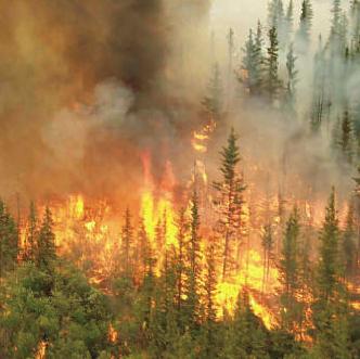 kebakaran hutan 1