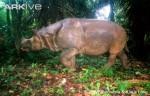 Daftar Binatang Langka Indonesia