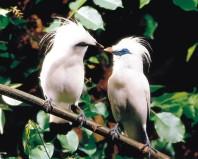 burung langka indonesia