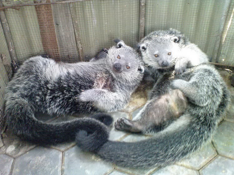 400 Gambar Binatang Lucu Sunda  Paling Baru