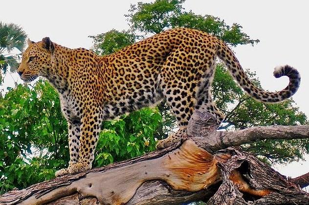 450+ Gambar Binatang Dan Namanya HD