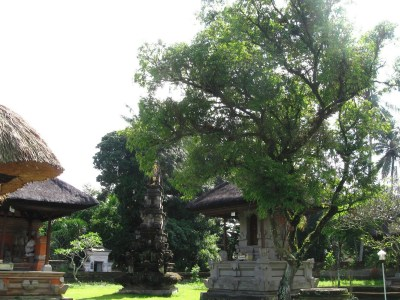 Pohon Nagasari