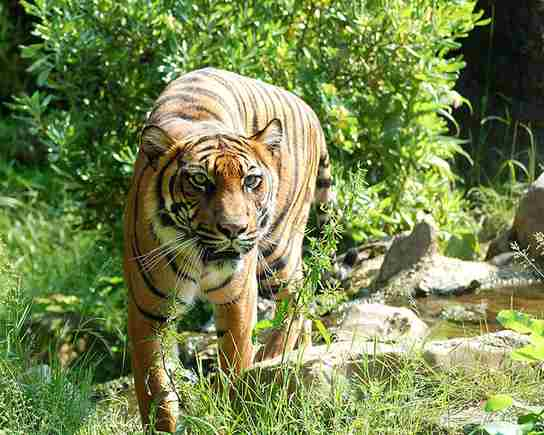 Binatang, disebut apa dalam bahasa daerah? (gambar: commons.wikipedia)