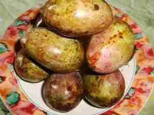 Mangga Kasturi