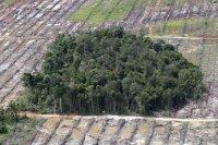 gambar-foto-kerusakan-hutan-10