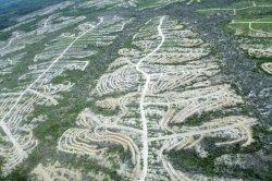 gambar-foto-kerusakan-hutan-11