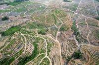 gambar-foto-kerusakan-hutan-12