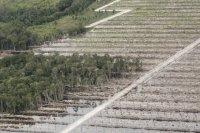 gambar-foto-kerusakan-hutan-2