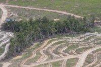 gambar-foto-kerusakan-hutan-4