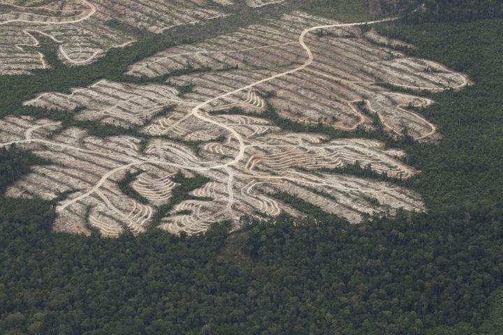 Gambar kerusakan hutan | foto kerusakan hutan