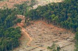 gambar-foto-kerusakan-hutan-6