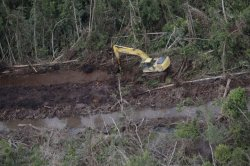 gambar-foto-kerusakan-hutan-7