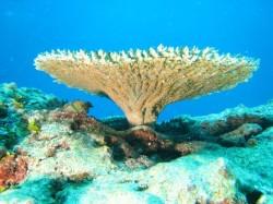 Terumbu-karang-coral-reef-03