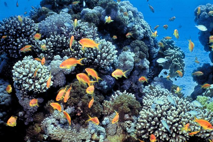 terumbu karang Transplantasi terumbu karang mempunyai pengertian sebagai salah satu teknik pelestarian (rehabilitasi) terumbu karang yang semakin terdegradasi dengan teknik pencangkokan.