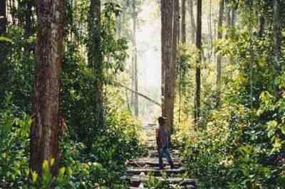 Hutan kayu ramin