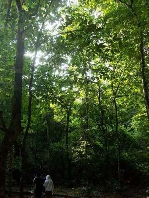 Hutan tropis pulau Peucang