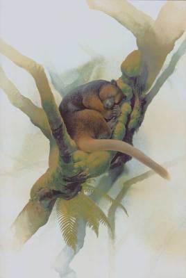 Kanguru Pohon Wondiwoi (Dendrolagus mayri)