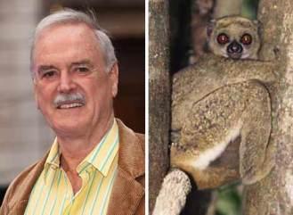 Kukang John Cleese