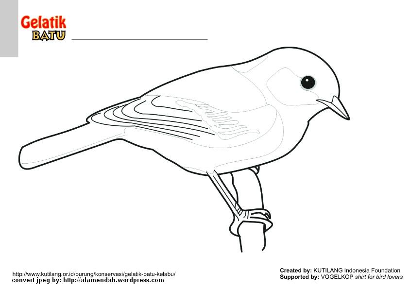 660 Koleksi Sketsa Gambar Hewan Burung Terbaik