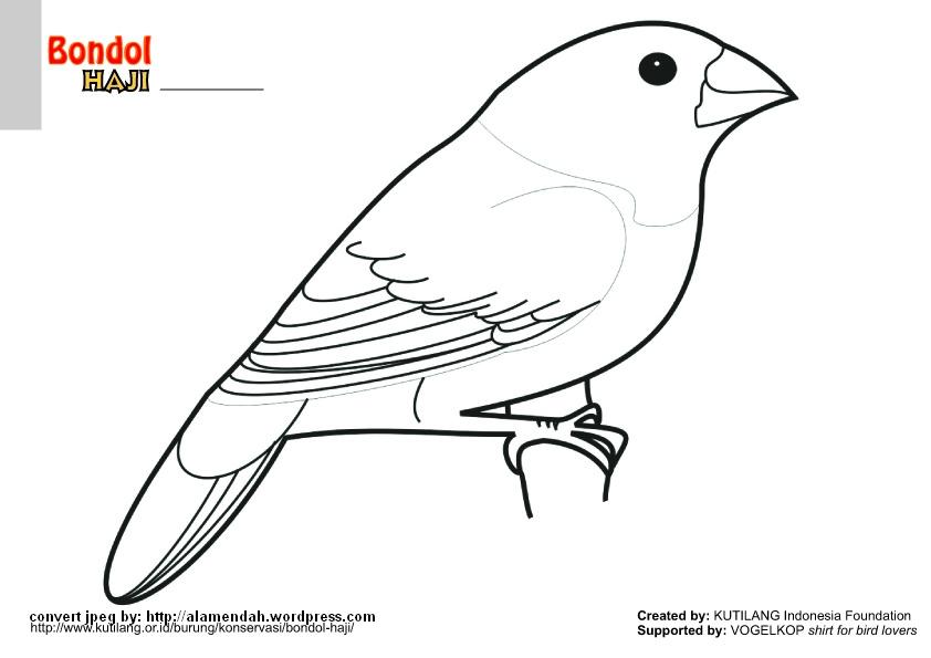 510 Koleksi Gambar Hewan Burung Mewarnai Terbaik
