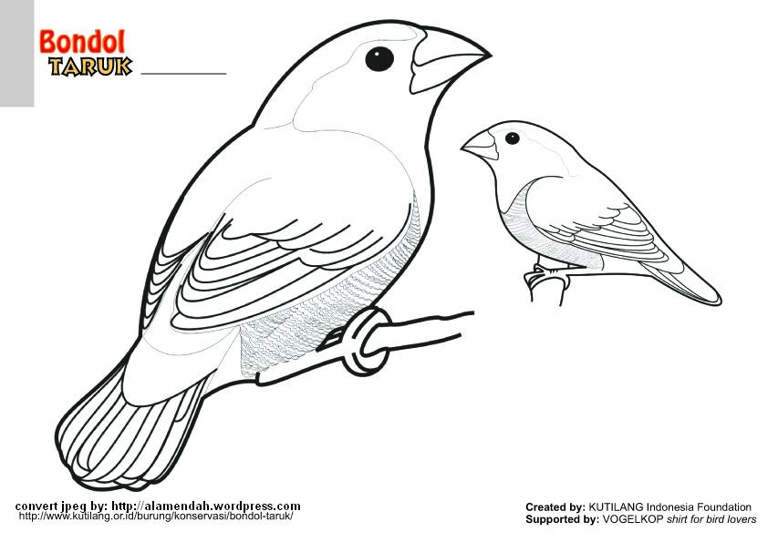 35  Ide Mewarnai Gambar Burung Sketsa