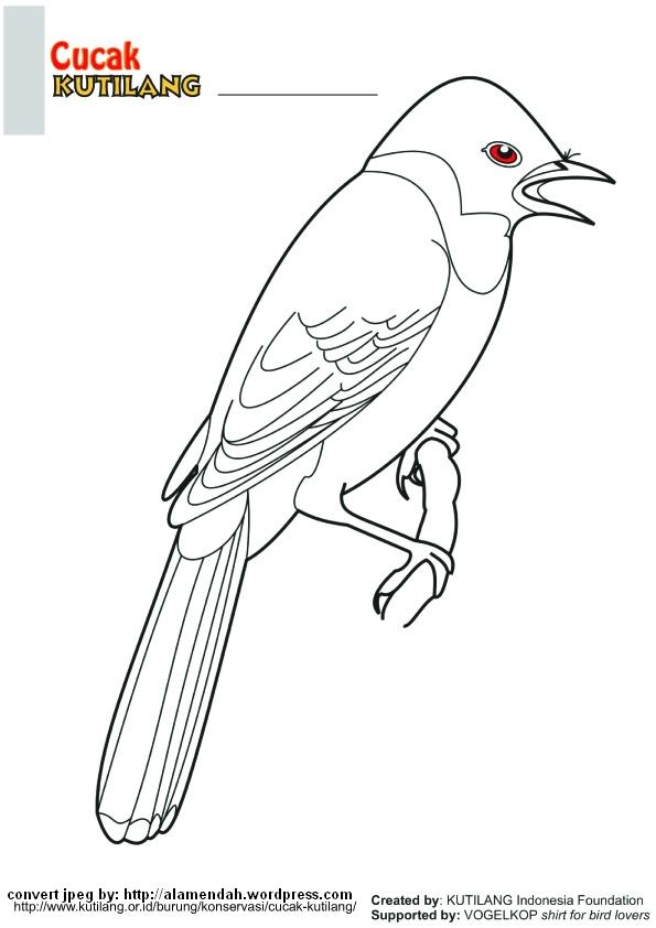 Download Mewarnai Gambar Burung Indonesia Alamendahs Blog