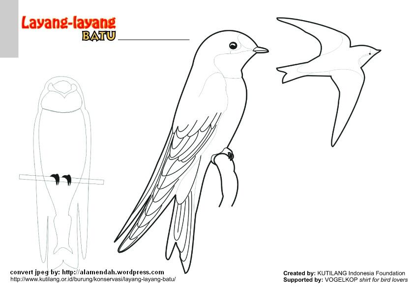 Download Mewarnai Gambar Burung Indonesia Alamendah S Blog