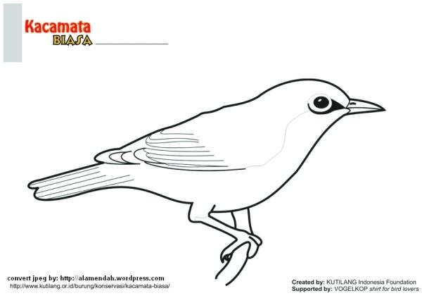 410 Gambar Burung Cendrawasih Yang Belum Diwarnai Terbaik