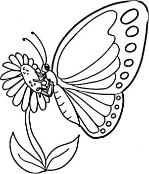 mewarnai-gambar-kupu-kupu-05