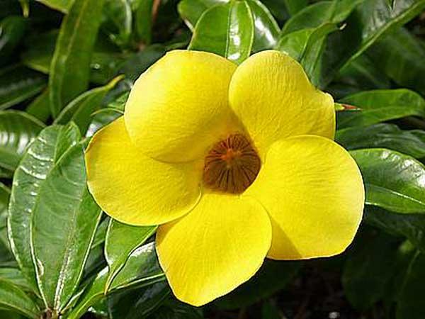 7 Jenis Bunga Yang Paling Mudah Perawatannya Alamendah S Blog Laman 3