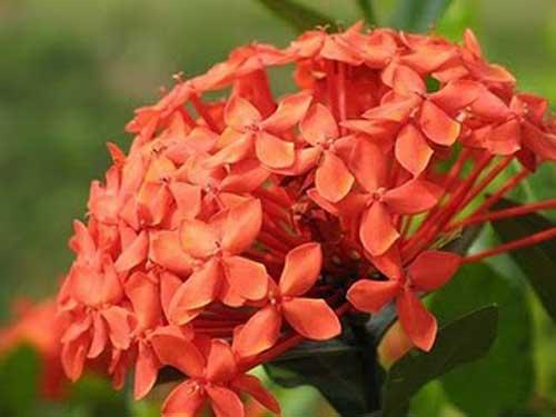 7 Jenis Bunga Yang Paling Mudah Perawatannya Alamendah S Blog