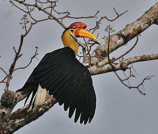 Sedikit Tentang 666: Daftar 400+ Burung Endemik Indonesia