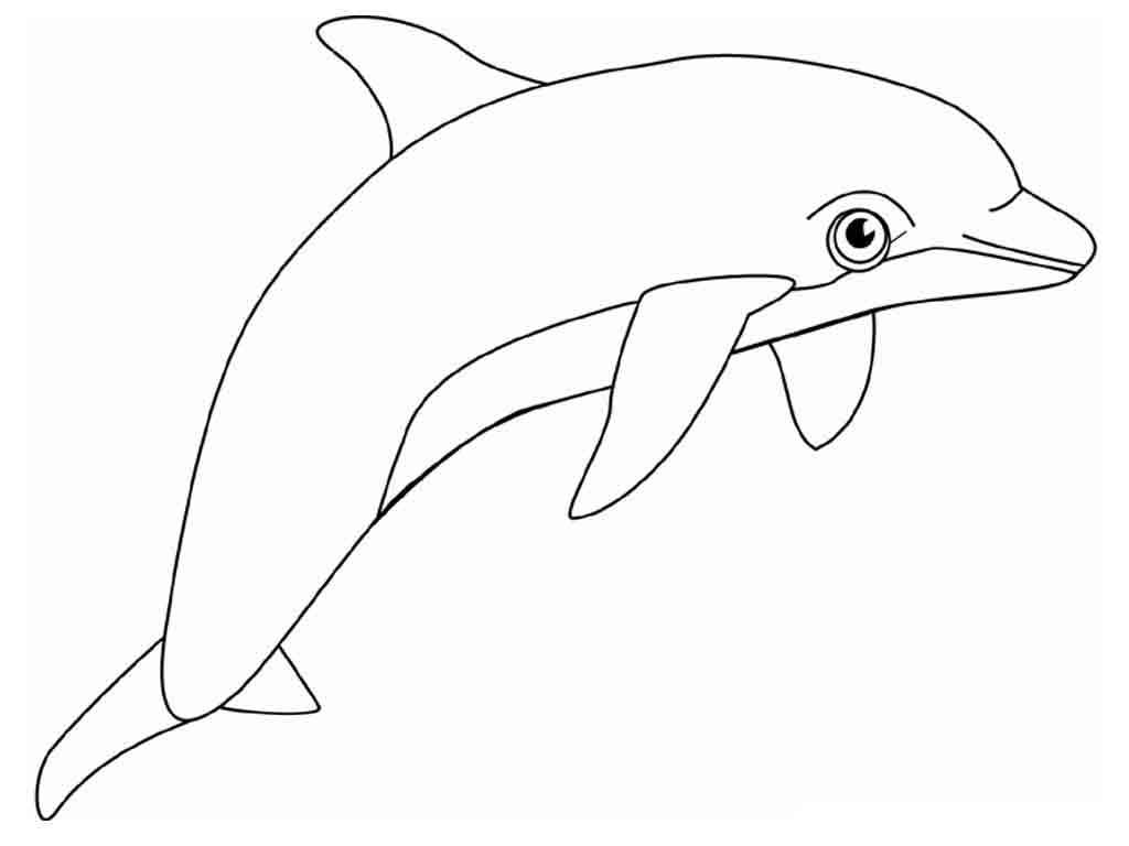 adalah 1024 — 768 piksel Mewarnai gambar lumba lumba