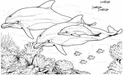 Mewarnai Gambar Ikan Lumba Lumba Dolphin Alamendah S Blog