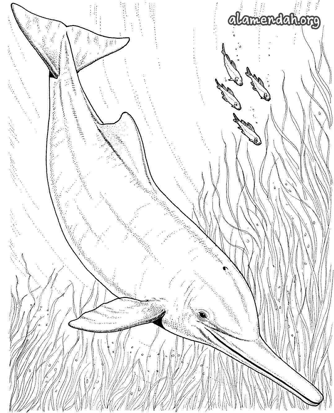 Mewarnai Gambar Ikan Lumba Lumba Dolphin