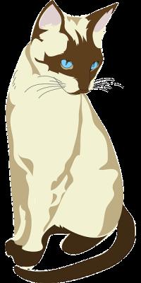 Gambar kucing cantik