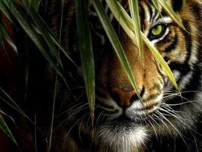 Mata harimau mengintip di antara pepohonan