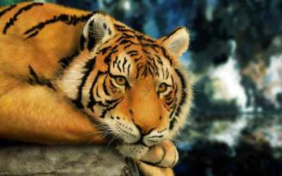 Wallpaper Harimau Lucu