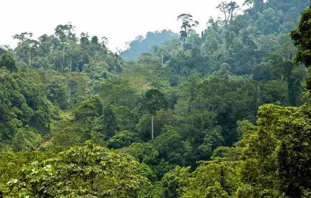 Gambar Hutan Hujan Tropis Indonesia