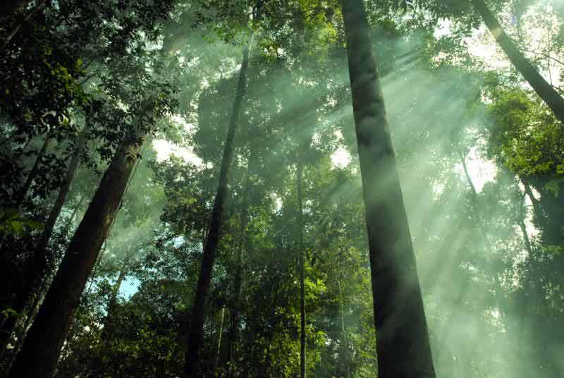 hutan-hujan-tropis-5 | Alamendah's Blog