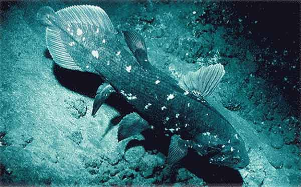 Ikan raja laut atau Latimeria