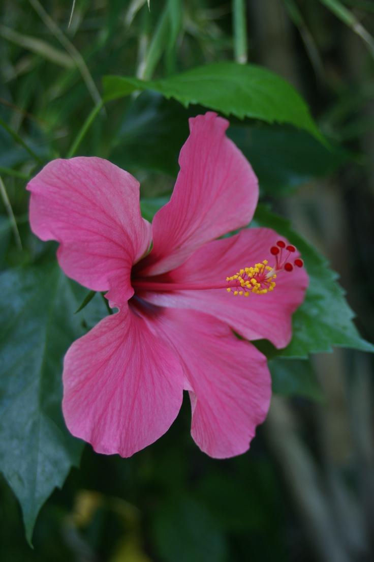 Bunga Sepatu Alamendah 39 S Blog