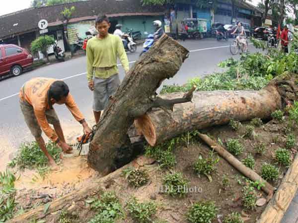 Perda Perlindungan Pohon
