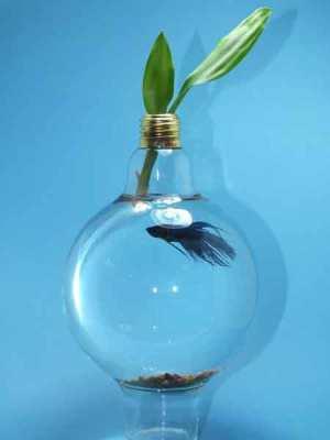 Menggunakan bohlam lampu sebagai akuarium dan pot bunga