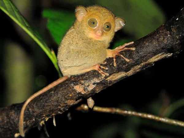 5500 Gambar Hewan Fauna Endemik Gratis Terbaik