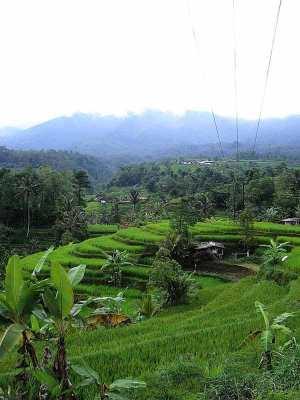 Jati Luwih Bali