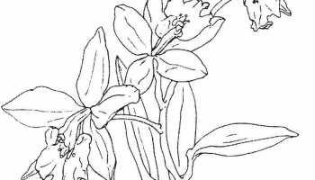 Koleksi Wallpaper Gambar Bunga Indonesia Alamendahs Blog