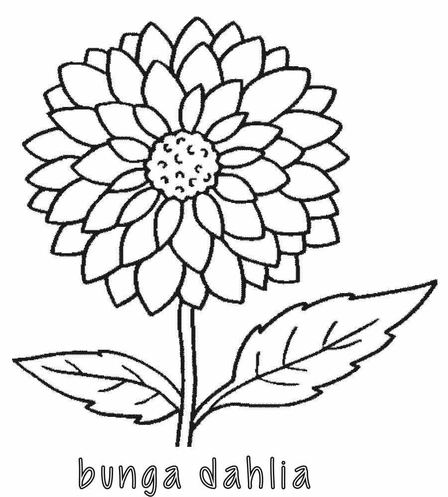 Mewarnai Bunga Dahlia